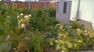 Gemüsegarten Sommer 2015