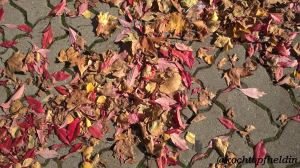 Herbst6