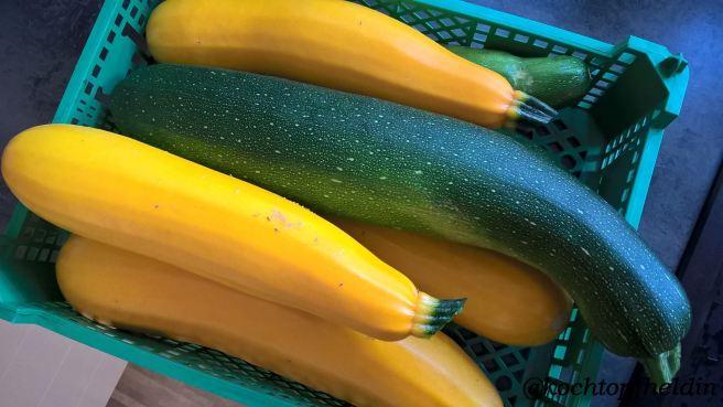 Zucchiniernte